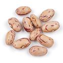 Thumb b22 cranberrry beans main
