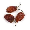 Thumb c09 habanero chiles peppers main